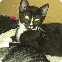 Adopt A Pet :: Sam - Medford, NY