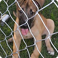 Adopt A Pet :: Patrick - Plano, TX