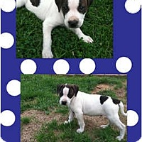Adopt A Pet :: Luke - Sylvania, OH