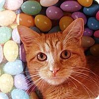 Adopt A Pet :: Marcy - Albany, NY
