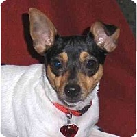 Adopt A Pet :: RILEY - Palm Coast, FL