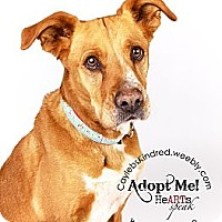 Adopt A Pet :: Nutmeg - Best Dog Ever! - Denver, CO
