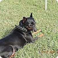 Adopt A Pet :: Dino - Nashville, TN