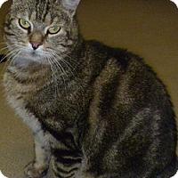 Adopt A Pet :: Patrick - Hamburg, NY