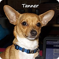 Adopt A Pet :: Tanner - New Orleans, LA