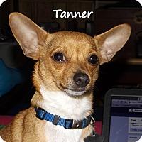 Adopt A Pet :: Tanner - Metairie, LA