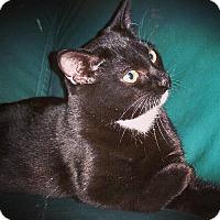 Adopt A Pet :: Roo - Royal Palm Beach, FL