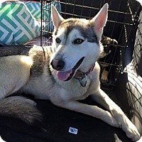 Adopt A Pet :: Nadia - Elkhart, IN