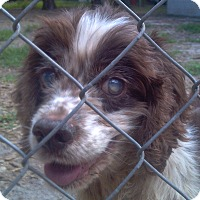 Adopt A Pet :: Emma - Williston, FL