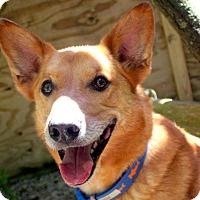 Adopt A Pet :: Sota - Fennville, MI