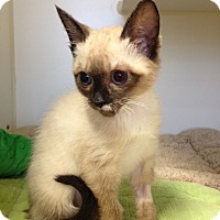 Adopt A Pet :: Doheny - Mission Viejo, CA
