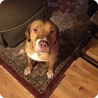 Adopt A Pet :: Bosley - Cumming, GA