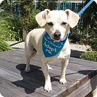 Adopt A Pet :: Princess II - Pacific Grove, CA