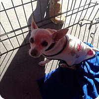 Adopt A Pet :: Daisy - North Hollywood, CA