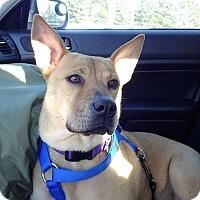 Adopt A Pet :: Skylar (fostered in Maine) - Cranston, RI