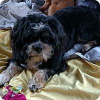 Adopt A Pet :: Colonel Hogan - San Diego, CA