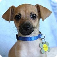 Adopt A Pet :: Oberyn - Phoenix, AZ