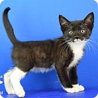 Adopt A Pet :: Lewis - Carencro, LA