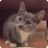 Adopt A Pet :: Ashlee - Long Beach, NY