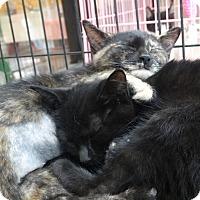 Adopt A Pet :: Dellana and Danelly - Elyria, OH