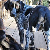 Adopt A Pet :: Blanche Devereaux - Brookside, NJ