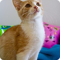 Adopt A Pet :: Royal - Oviedo, FL