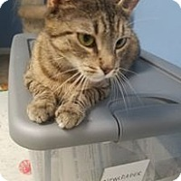 Adopt A Pet :: Sierra - Glen Mills, PA