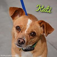 Adopt A Pet :: Kati - Phoenix, AZ