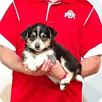 Adopt A Pet :: Chandler - New Philadelphia, OH