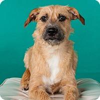 Adopt A Pet :: Winnie - Houston, TX