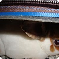 Adopt A Pet :: Kodak - Raleigh, NC