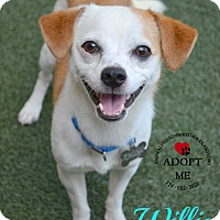 Adopt A Pet :: Willie - Youngwood, PA