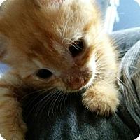 Adopt A Pet :: Dino - Butner, NC