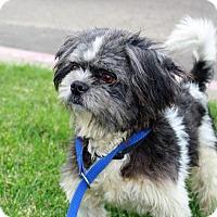 Adopt A Pet :: Oscar - Modesto, CA