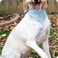 Adopt A Pet :: FINN(OUR