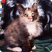 Adopt A Pet :: Jasmine - Palmdale, CA