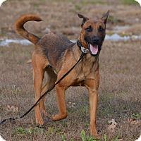 Adopt A Pet :: Rufus - Lebanon, MO