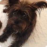 Adopt A Pet :: Demi - McKinney, TX