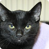Adopt A Pet :: Elvis - Sarasota, FL