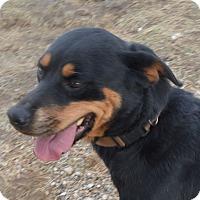 Adopt A Pet :: Jade - Prole, IA