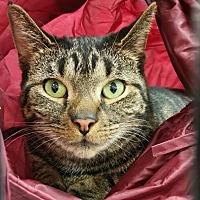 Adopt A Pet :: Minka - Charlotte, MI