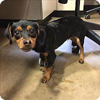 Adopt A Pet :: Junie - Riverside, CA