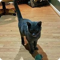 Adopt A Pet :: Bojangles - Cherry Hill, NJ