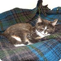 Adopt A Pet :: Tanya - Naperville, IL