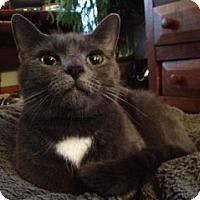 Adopt A Pet :: Tate - Harrisonburg, VA