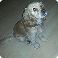 Adopt A Pet :: Bailey URGENT - San Diego, CA