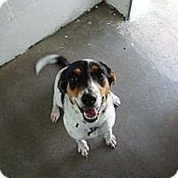 Adopt A Pet :: Dottie - Winter Haven, FL