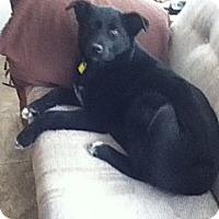 Adopt A Pet :: Kaya - Saskatoon, SK