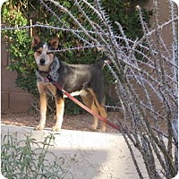 Adopt A Pet :: Cody -adoption pending - Phoenix, AZ