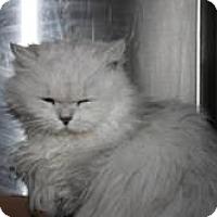 Adopt A Pet :: Ariana - Easley, SC